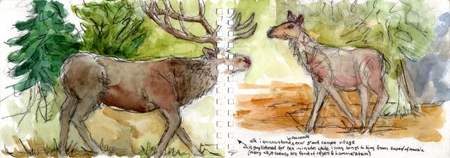 32-elk-at-grand-canyon