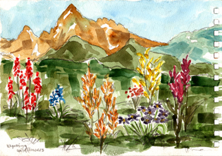 75-wyoming-wildflowers